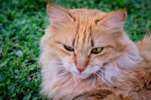 Cat, Animal, Kitten, Cute, Eyes, Whiskers, Green