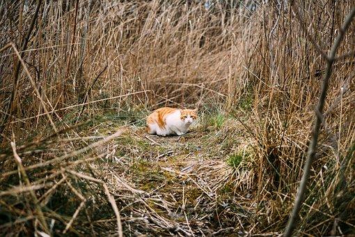 Cat, Animal, Kitten, Eyes, Whiskers, Field, Grass