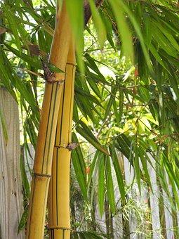 Bamboo, Tree, Branch
