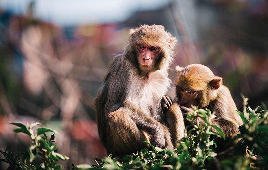 Animal, Monkey, Siblings, Parents, Family, Green