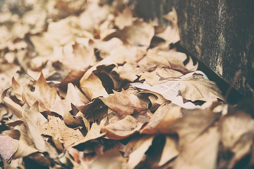 Leaves, Dried, Autumn, Fall, Summer, Nature