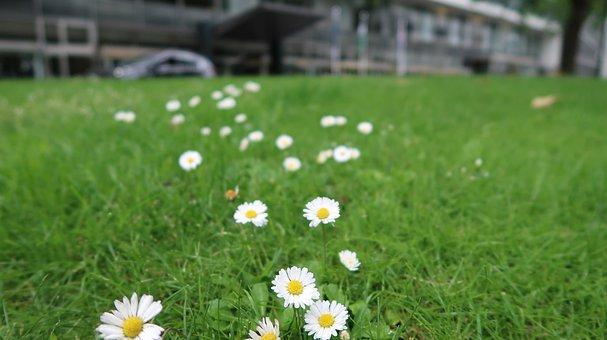 Flowers, Wildflower, Nature