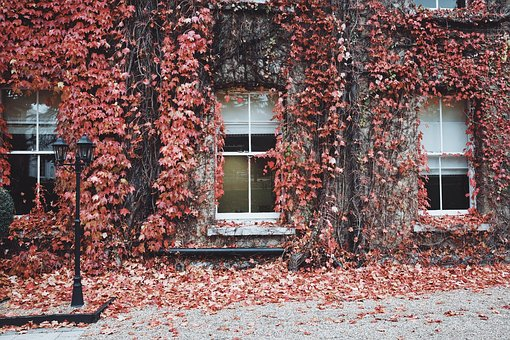 House, Windows, Glass, Leaves, Street, Fall, Autumn