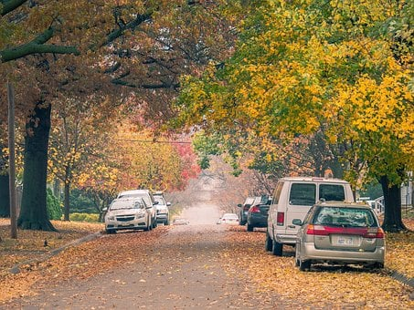 Trees, Nature, Cars, Vehicles, Dried, Leaves, Path
