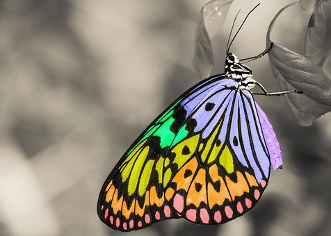 Colorful, Insect, Butterfly, Animal, Wings, Leaf
