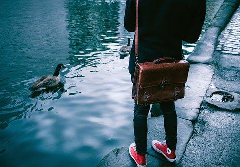 Shoes, Sneakers, Footwear, Converse, Duck, Swan, Bird