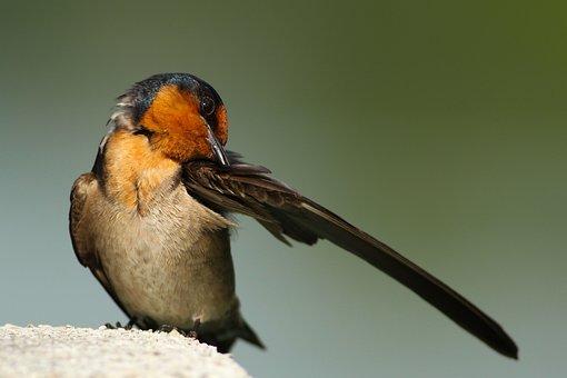 Bird, Wings, Beak, Grooming, Bokeh, Animal