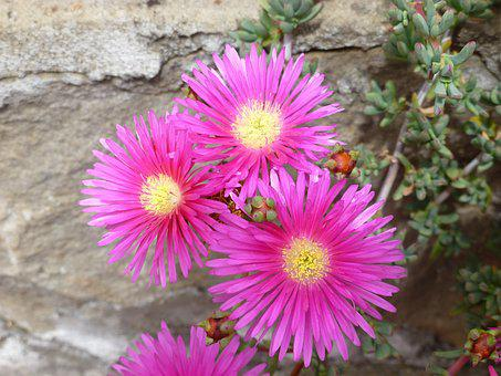 Flowers Of The Finca Bella Vista, Guasca, Cundinamarca