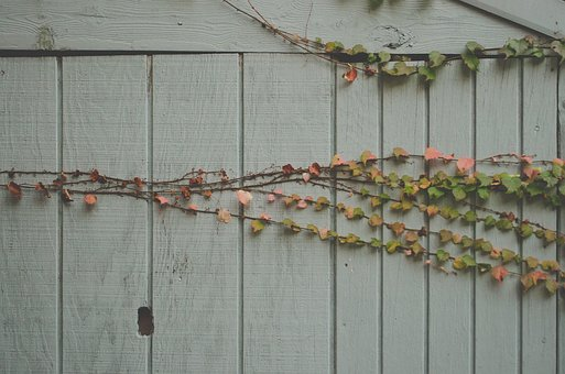 Green, Plant, Wood, Barn, Cabin, Vine, Leaves, Autumn