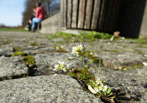 Flower, Moss, Bloom, Small, Small Flower, White, Close