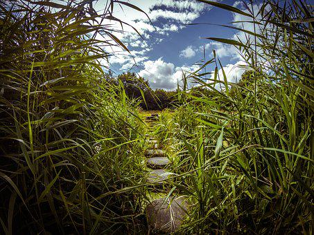 Path, Water, Stones, Reed, Green