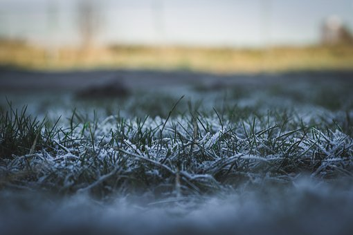 Nature, Grass, Landscape, Snow, White