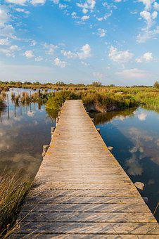 Web, Nature, Camargue, Water, Reed, Boardwalk, Bridge