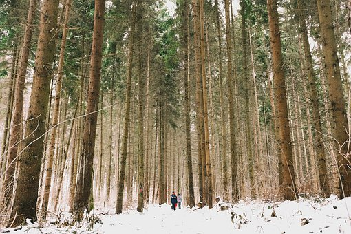 Woods, Forest, Green, Trees, Travel, Adventure, Camping