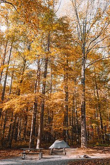 Trees, Forest, Plants, Nature, Autumn, Woods, Camp