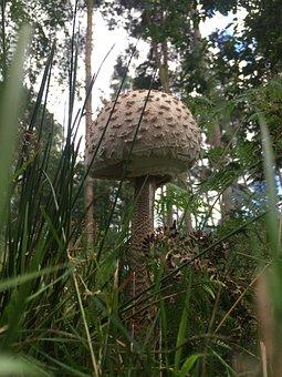 Fungus, Fungi, Mushroom, Nature, Forest, Mold