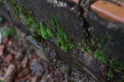 Moss, Green, Texture, Tree, Macro, Wet