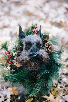 Dog, Puppy, Pet, Animal, Christmas, Green, Garland