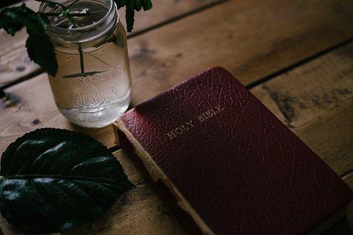 Glass, Jar, Water, Flower, Vase, Green, Leaf, Plant