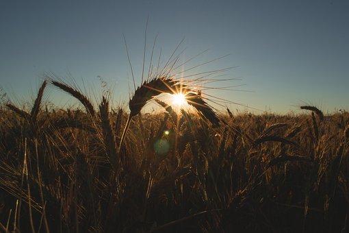 Morning, Sunshine, Sunrise, Sky, Nature, Grass, Plant