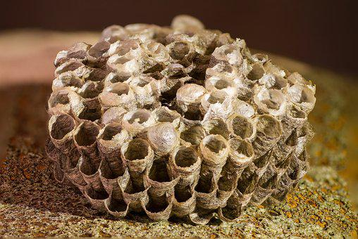 Honeycomb, Wasp-combs, The Hive