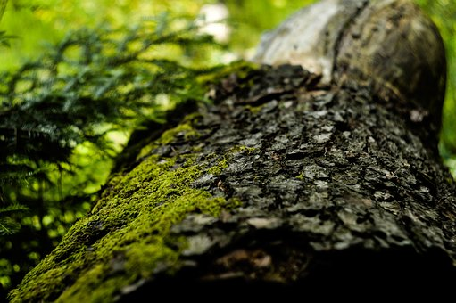 Tree, Plant, Nature, Green, Leaf, Moss, Forest