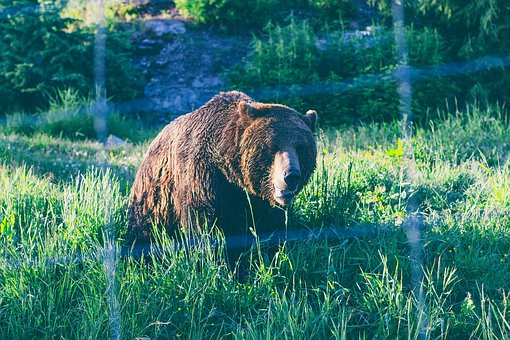 Green, Grass, Lawn, Nature, Outdoor, Animal, Wildlife