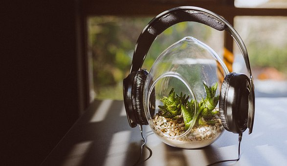 Headphones, Peaceful, Plant, Green, Leaves, Music, Song