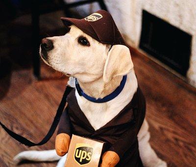 Dog, Puppy, Pet, Animal, Ups, Company