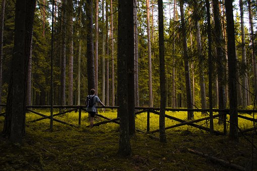 People, Man, Guy, Male, Alone, Travel, Outdoor, Nature