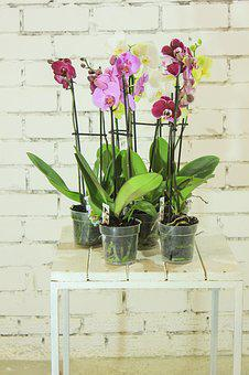 Flowers, Plant, Orchid, Ornamental Plant, Indoor Plant