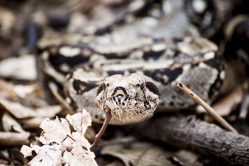 Snake, Animal, Reptile, Leaf, Fall, Wood