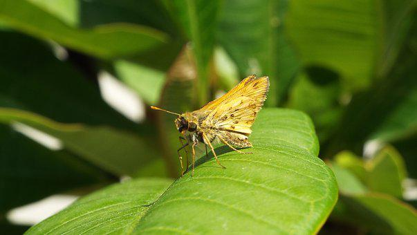 Butterfly, Moth, Leaf, Animal, Wing, Insect, Fly