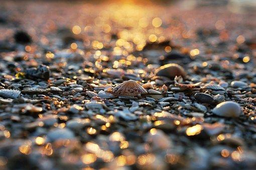 Sand, Beach, Shore, Stone, Clam, Shell, Nature