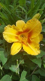 Flower, Yellow, Yellow Flower, Nature, Close, Summer