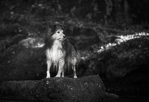 Dog, Animal, Pet, Puppy, Black And White, Rock