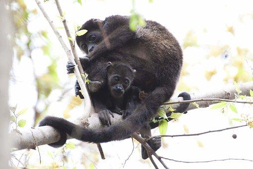 Monkey, Animal, Pet, Wildlife, Tree, Plant, Nature
