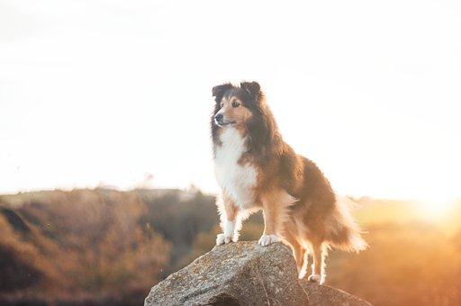 Sky, Sunrise, Rock, Outdoor, Dog, Puppy, Pet, Animal