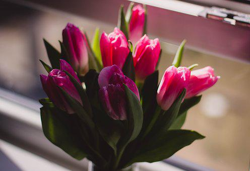 Tulip, Pink, Petal, Flower, Plant, Vase