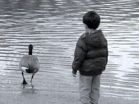 Boy, Water, Duck, Child, Childhood, Outdoor, Kid