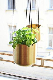 Flowerpot, Plant, Nature, Design, Display, Art, Cord