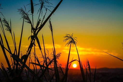 Grass, Plant, Field, Sunset, Sunrise, Sunlight