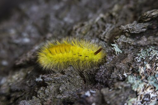 Rock, Yellow, Worm, Caterpillar, Insect
