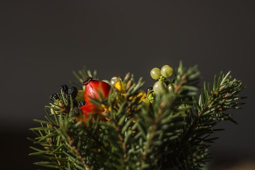 Tree, Plant, Red, Fruit, Display, Artificial