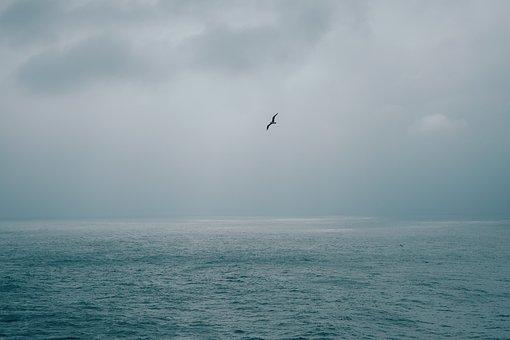Sea, Ocean, Water, Bird, Flying, Animal, Clouds, Sky