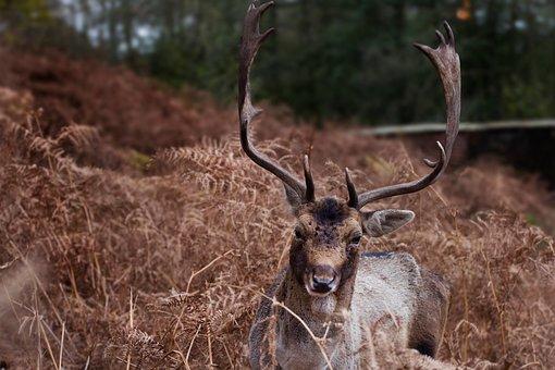 Horn, Deer, Animal, Wildlife, Forest, Trees, Plants