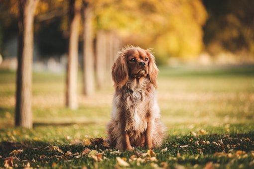 Dog, Puppy, Animal, Pet, Playground, Green, Grass