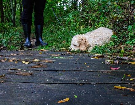People, Walking, Woman, Boots, Dog, Puppy, Pet, Animal