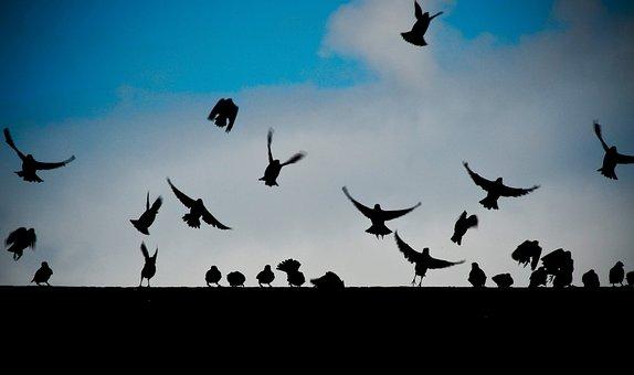 Birds, Fly, Animals, Dark, Wall, Blue, Sky