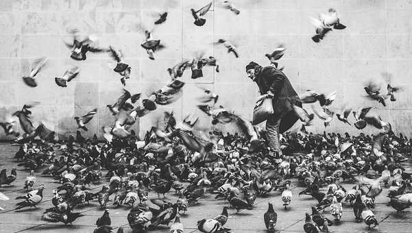 Black And White, People, Man, Dove, Pigeon, Birds